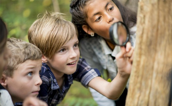 Examining bugs on a tree with magnifying glass
